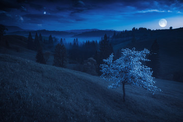 Flowering tree on a mountain hill in a moon light