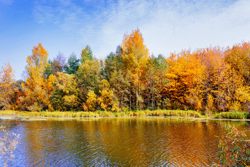 autumn forest on the lake