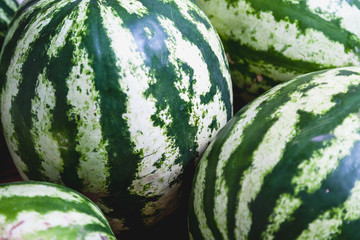 Striped watermelons close-up