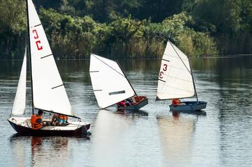 sailing regatta of young sailors