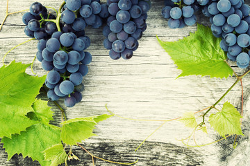 Blue grapes and bright grape leaves on an old wooden surface, close up, top view. Background with the copy space