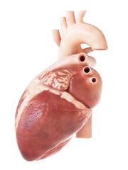 medically accurate 3d rendering of the heart