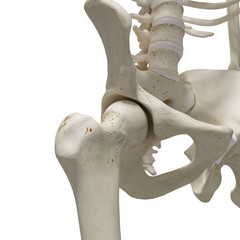 medically accurate 3d rendering of the hip joint