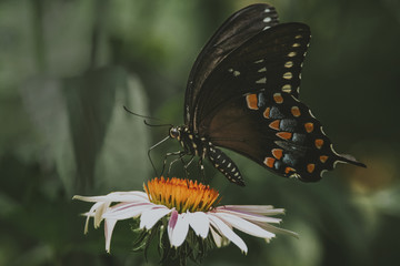 Close-up of butterfly feeding on flower at park