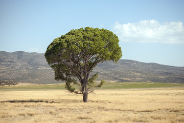 Single tree growing on grassy field during summer Wall mural