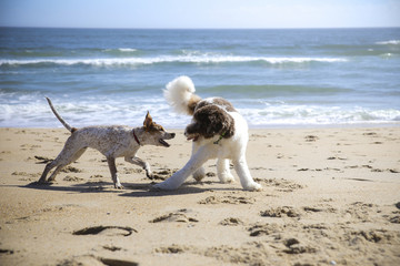 Dogs fighting at beach against sea and sky