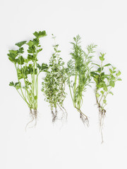 herbs on white background