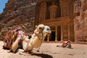 Camels in front of the Treasury in Petra