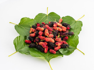 mulberry  on the leaf