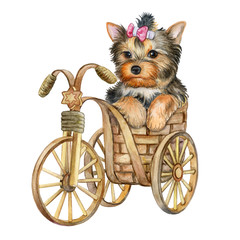 Cute puppy york terrier in a basket isolated on white background. The dog is on a bicycle. Watercolor. Ilustration. Picture. Template