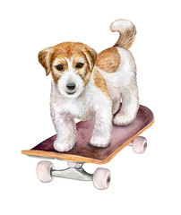Dog Jack Russell Terrier on skateboard isolated on white background. Watercolor. Illustration. Clipart. Handmade
