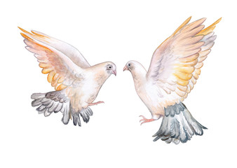 Pigeons isolated on white background. Doves. Two birds. Watercolor. Illustration. Template.