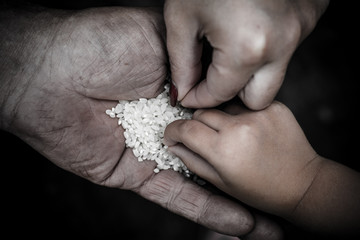 On the palm of the man lies a lot of rice grains. Children's and women's hand take one grain