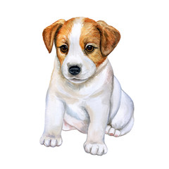 Puppy Jack Russell Terrier isolated on white background. Watercolor. Illustration. Picture