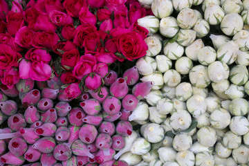 Background image of pink and white roses