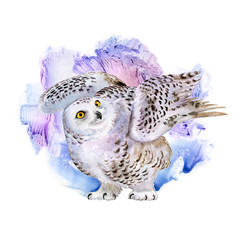 Polar white owl with colorful abstract background. Blots. Watercolor. Illustration. Template. Picture. Image
