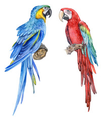 Blue-yellow macaw. Red-and-green winged macaw. A parrot. Birds isolated on white background. Watercolor. Illustration. Picture. Form