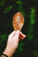 A tree sketched on a leaf