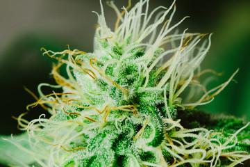 Cannabis Macro