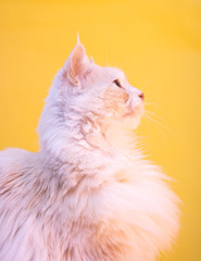 Cat profile
