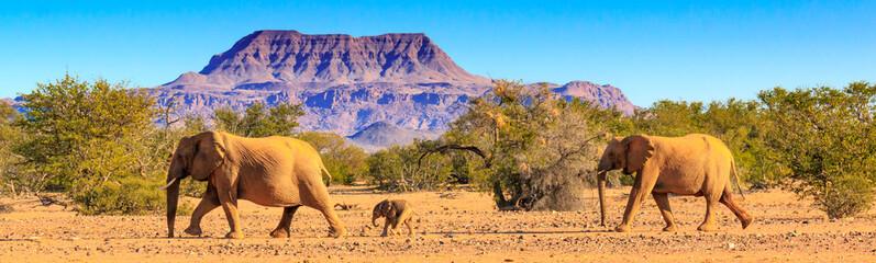 Zelfklevend Fotobehang Olifant Wüstenelefanten