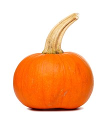 Single pumpkin with long stem isolated on a white background