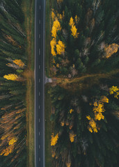 Aerial view of a pine forest during fall season
