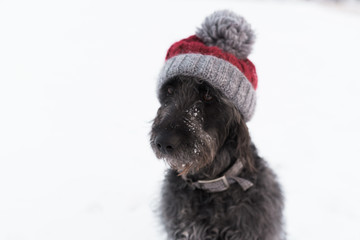 dog wearing a wooly hat