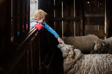 boy petting a sheep