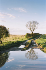 Tree reflected in a puddle along a farm track. Norfolk, UK.