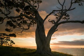 Beautiful tree silhouetted on sunrise