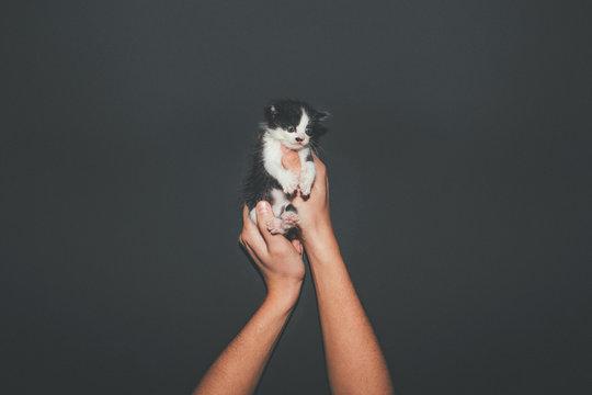 Three weeks old Kitten