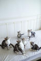lovley young cat indoor