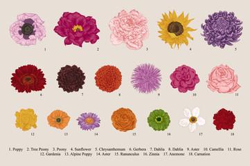 Flowers set. Botanical vector vintage illustration. Design elements. Colorful.