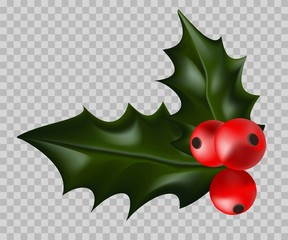 Christmas holly with ripe red berries isolated illustration