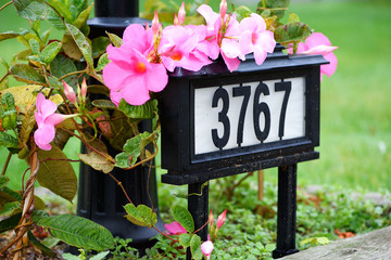 A house number on the front yard with flowers in neighborhood