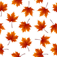 Red maple leaves isolated on white background