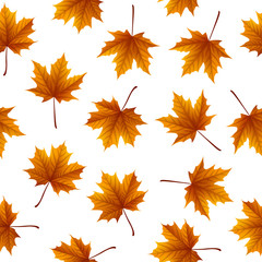 Brown maple leaves isolated on white background