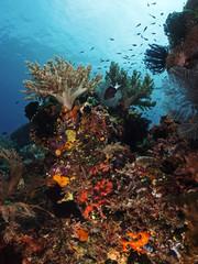 Intact reef landscape, intakte Riff-Landschaft
