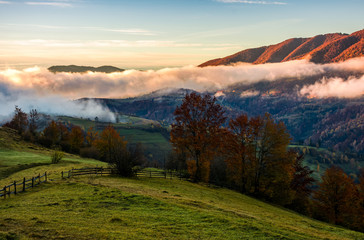 fence and trees on rural hillside meadow in morning fog. stunning countryside landscape in mountainous area in autumn