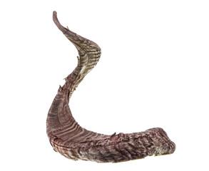 animal horn on white isolated background