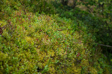 moss in the wood