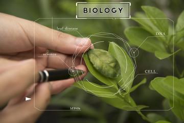 Bio technology professional engineer examining plant leaf disease.