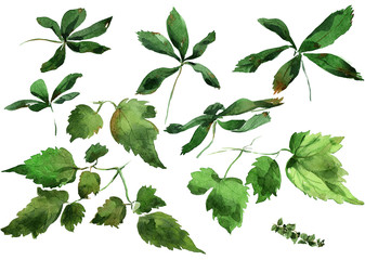 Ivy leaves ornament