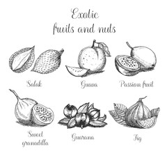 Hand drawn exotic fruits and nuts