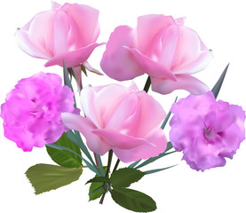 bunch of five light pink roses on white
