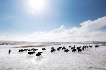 landscape of pasture with white snow