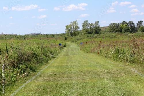 tall grass field brown the long grass path in the tall field field