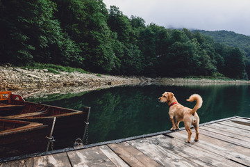 Dog standing on wooden pier