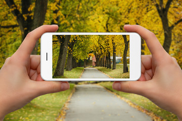 Woman take photo of autumn park by phone.